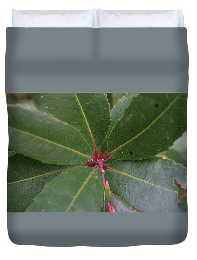 Leaves Duvet Cover featuring the photograph Abstract Leaves by Kyle Hillman