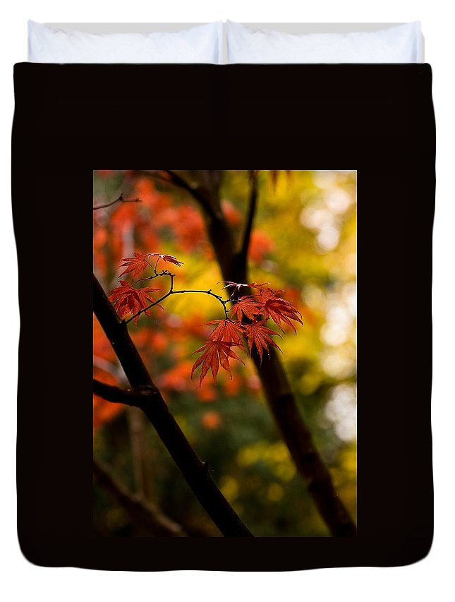 Acer Duvet Cover featuring the photograph Acer Silhouette by Mike Reid
