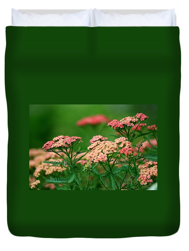 Yarrow Duvet Cover featuring the photograph Achillae's Heel by Marla McFall