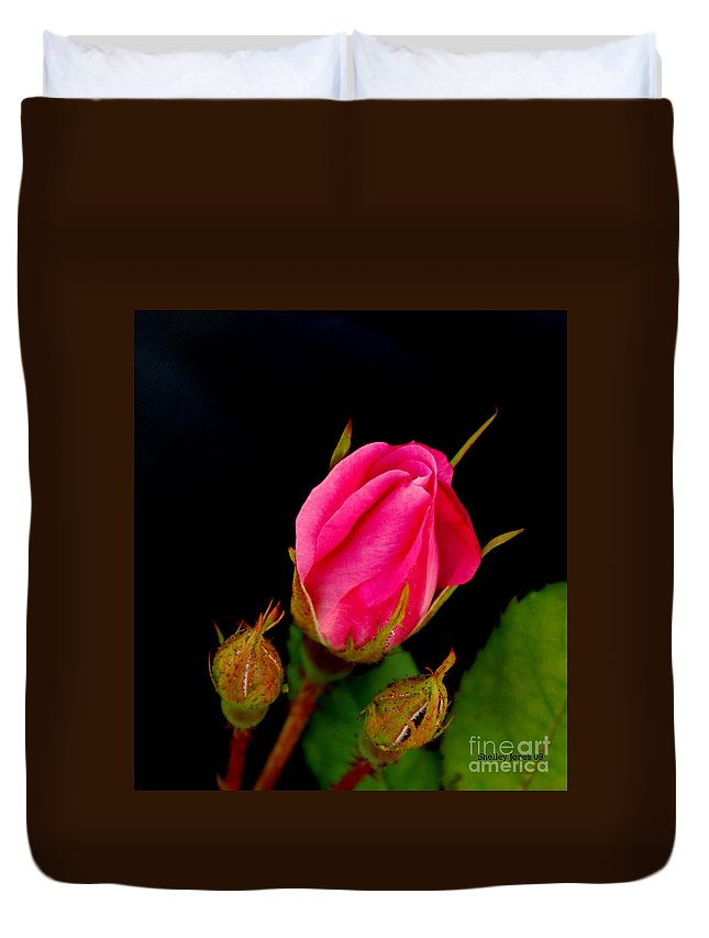 Rose Duvet Cover featuring the photograph Admirers by Shelley Jones