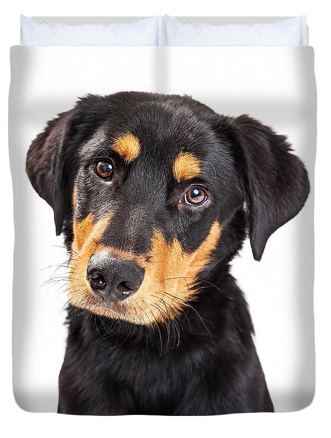 Adorable Duvet Cover featuring the photograph Adorable Rottweiler Crossbreed Puppy Close-up by Susan Schmitz