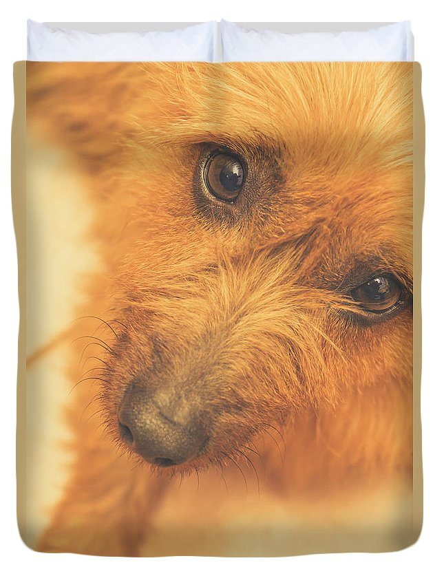 Dogs Duvet Cover featuring the photograph Adorable Small Pet Dog In Tones Of Red by Jorgo Photography - Wall Art Gallery