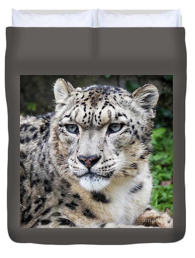 Leopard Duvet Cover featuring the photograph Adult Snow Leopard Portrait by Jane Rix