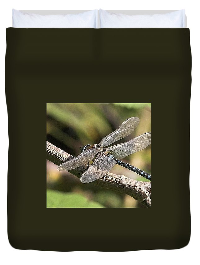 Dragonfly Duvet Cover featuring the photograph Aeshna Juncea - Common Hawker taken At by John Edwards