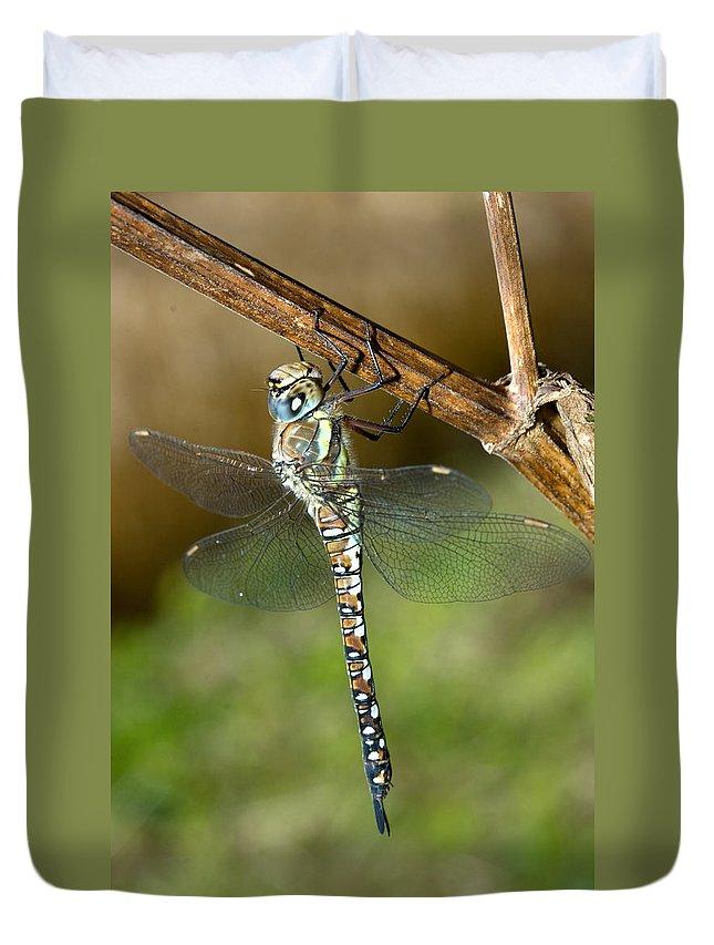 Aeshna Mixta Duvet Cover featuring the photograph Aeshna Mixta Dragonfly by Bob Kemp