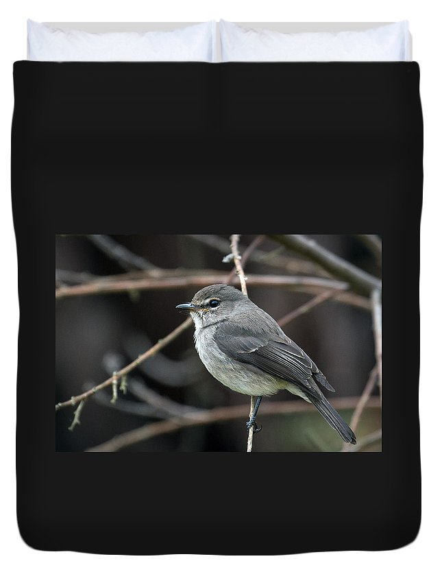 Bird Duvet Cover featuring the photograph African Dusky Flycatcher by Claudio Maioli