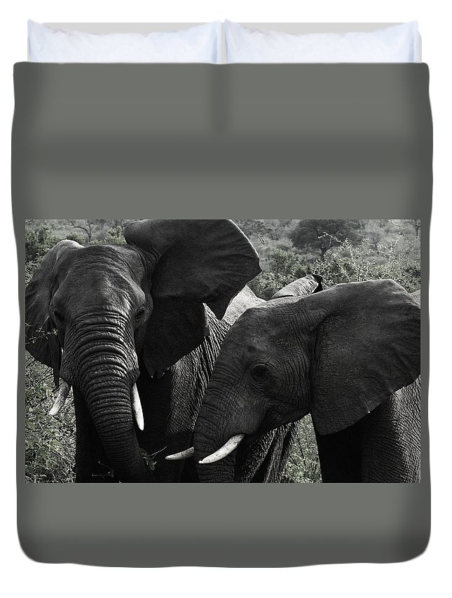 Africa Duvet Cover featuring the photograph African Elephants by Steve Evans