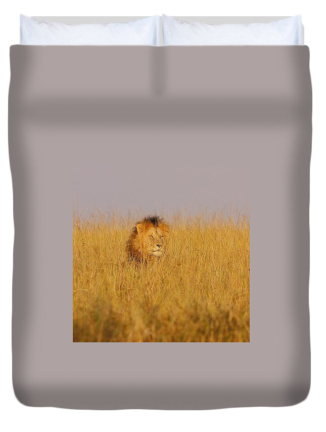 Africa Kenya Wildlife Lion Masaimara Duvet Cover featuring the photograph African Lion by Quazi Ahmed Hussain