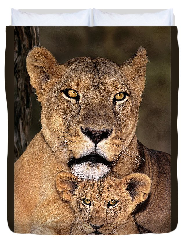 African Lion Duvet Cover featuring the photograph African Lions Parenthood Wildlife Rescue by Dave Welling