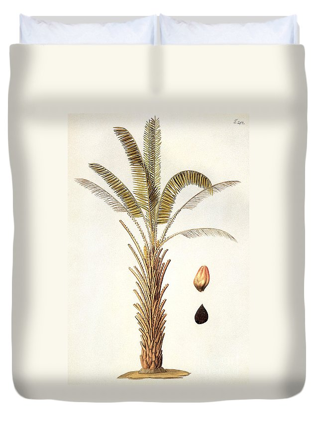 1780 Duvet Cover featuring the photograph African Oil Palm by Granger