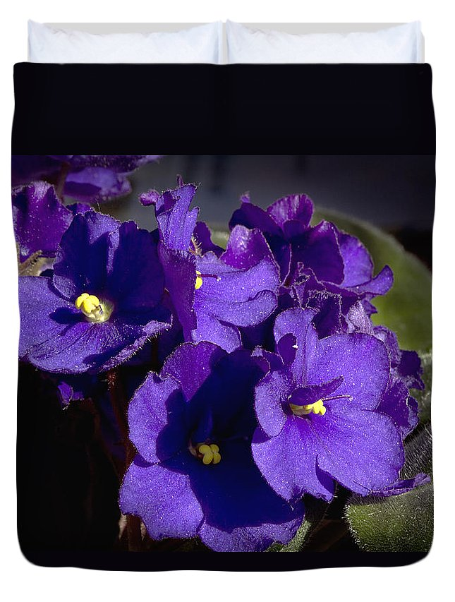 Flowers Duvet Cover featuring the photograph African Violets by Phyllis Denton