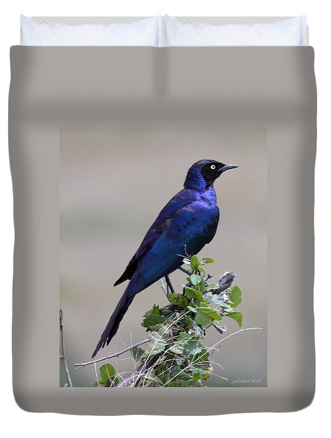 Starling Duvet Cover featuring the photograph African White Eye Starling by Joseph G Holland