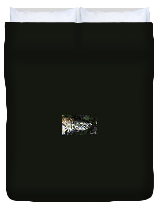 Photography Salmon Death Fish River Malahat Hatch Duvet Cover featuring the photograph After Death by Seon-Jeong Kim