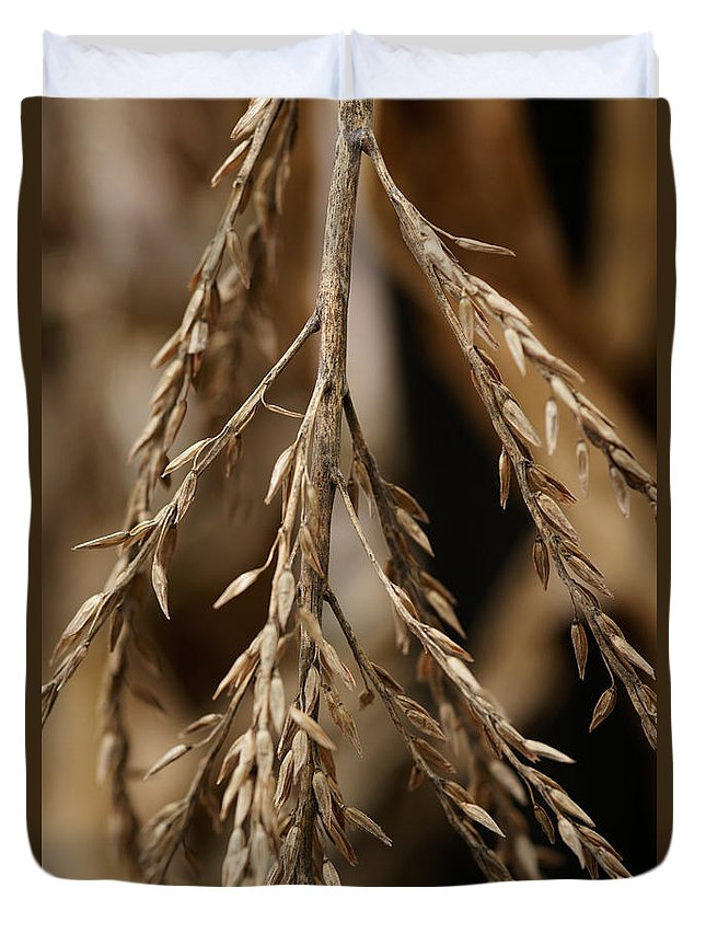 Corn Duvet Cover featuring the photograph After The Harvest - 1 by Linda Shafer