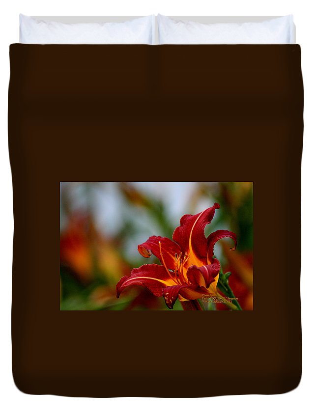 Flower Duvet Cover featuring the photograph After The Rain Came The Flowers by Paul SEQUENCE Ferguson       sequence dot net
