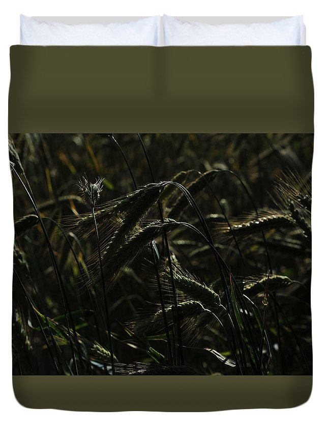 Ripe Duvet Cover featuring the photograph Afternoon Light by Randi Grace Nilsberg