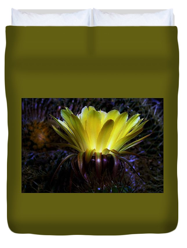 Yellow Cactus Flower Duvet Cover featuring the photograph Aglow by Hazel Vaughn