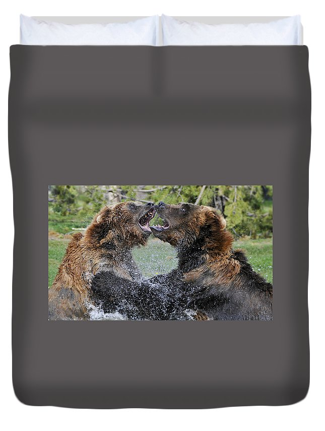 Yellowstone Duvet Cover featuring the photograph Agree To Disagree by Sandra Bronstein