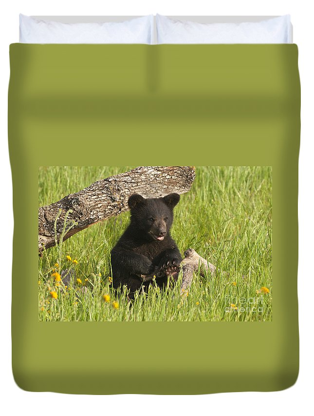 Bear Duvet Cover featuring the photograph Ain't I Cute by Sandra Bronstein