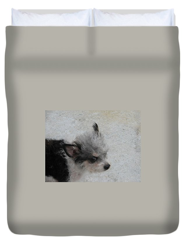 Puppy Duvet Cover featuring the photograph Airport Pup by Kelly Mezzapelle