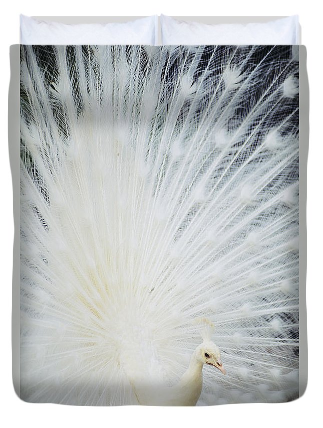 Albino Duvet Cover featuring the photograph Albino Peacock by Rita Ariyoshi - Printscapes