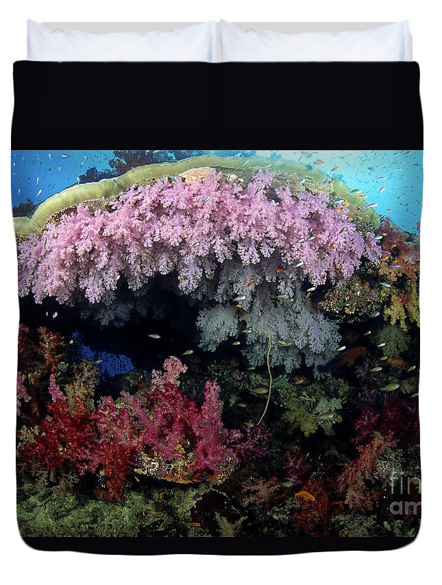 Alcyonarian Duvet Cover featuring the photograph Alcyonarian Coral - Fiji by Dave Fleetham - Printscapes