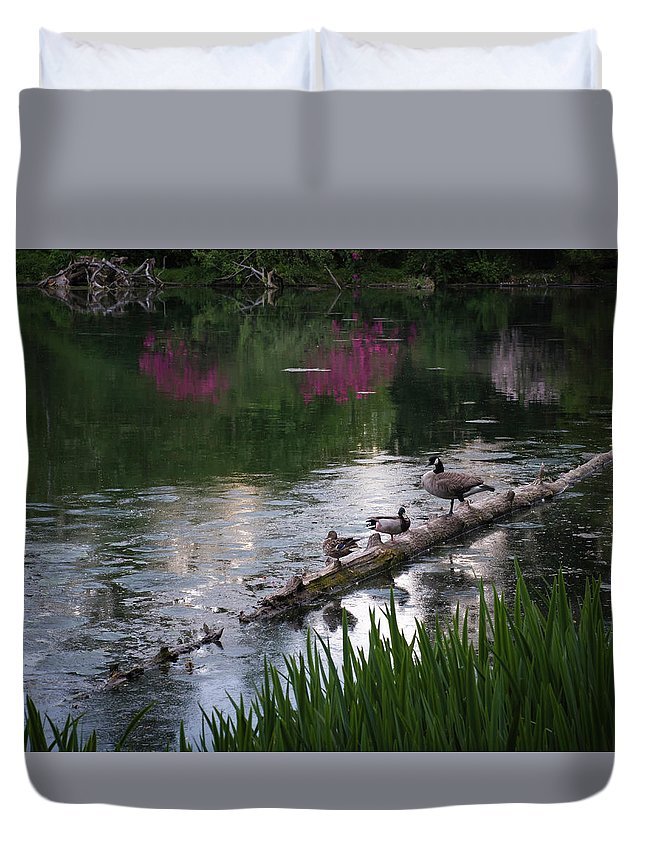 Birds Duvet Cover featuring the photograph All Along The Log by Steven Clark