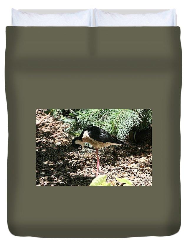 Bird Duvet Cover featuring the photograph All Clear - Bird Looking Under Legs by Lynn Michelle