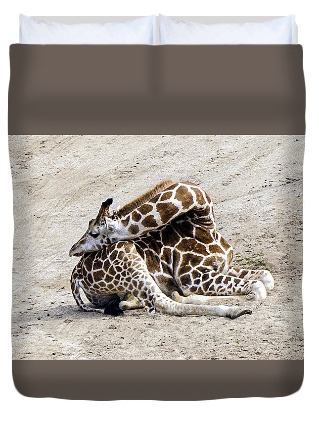 Giraffe Duvet Cover featuring the photograph All Folded Up by William Bitman