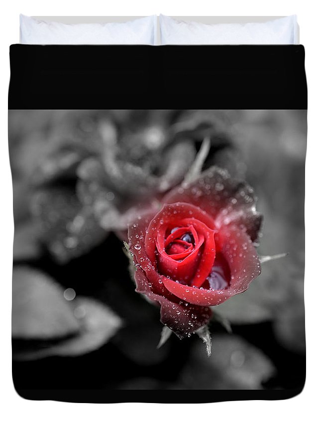Rose Duvet Cover featuring the photograph All Is Forgiven by Paul Gavin