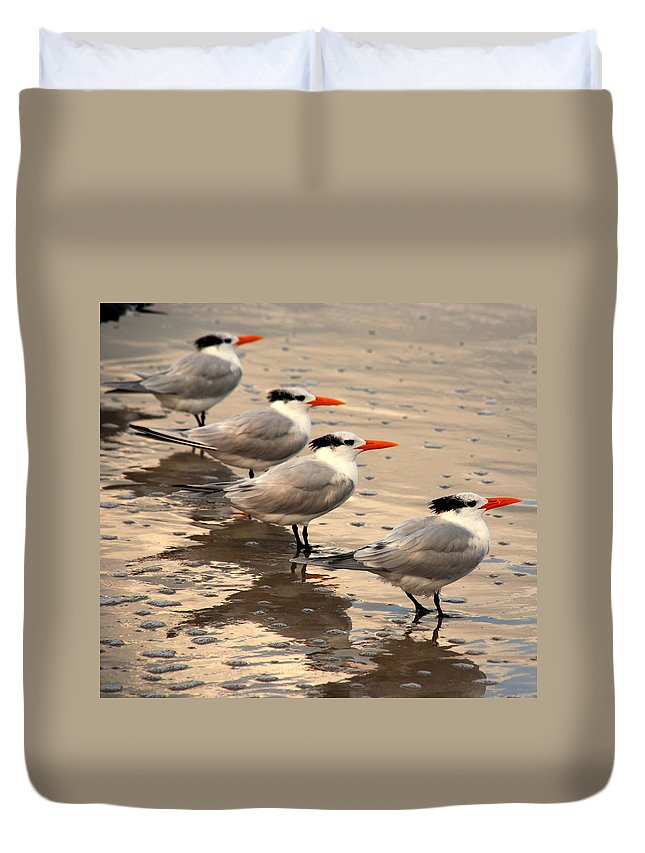 Wildlife Duvet Cover featuring the photograph All Lined Up by Susanne Van Hulst