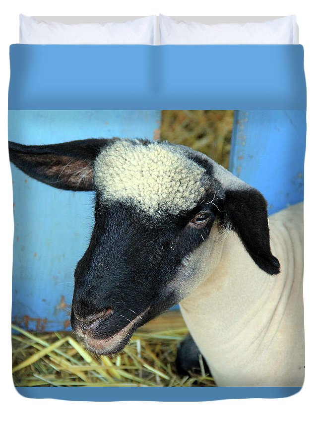 Animals Duvet Cover featuring the photograph All Smiles by Becca Brann