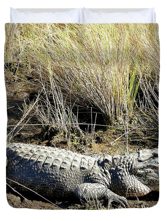 Alligator Duvet Cover featuring the photograph Alligator by Katherine W Morse