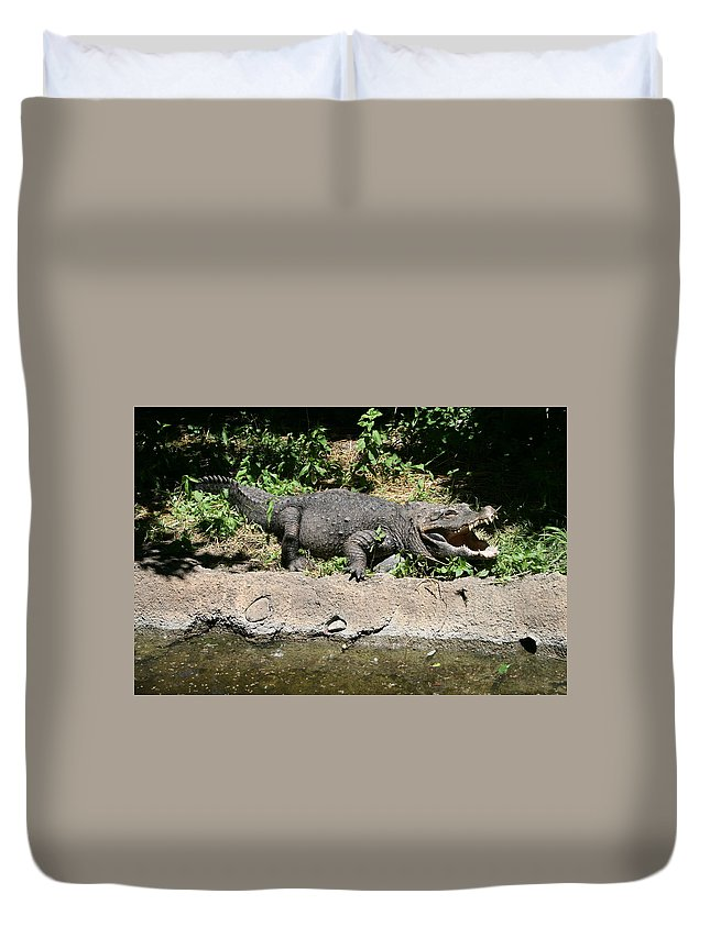 Alligator Duvet Cover featuring the photograph Alligator Surprise by Lynn Michelle
