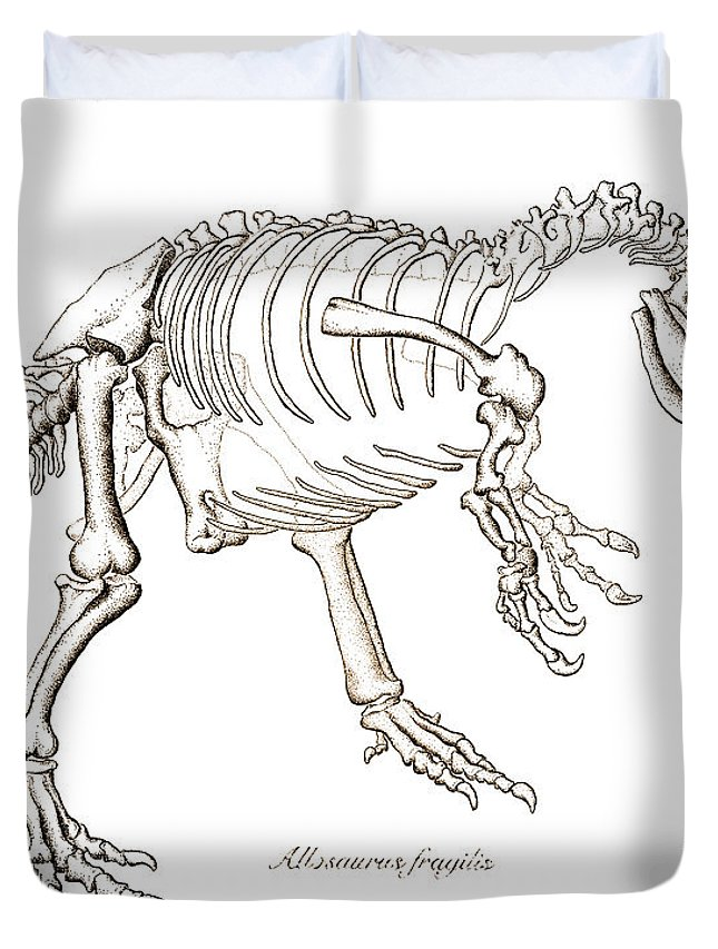 Allosaurus Duvet Cover featuring the drawing Allosaurus Skeleton by Karla Beatty