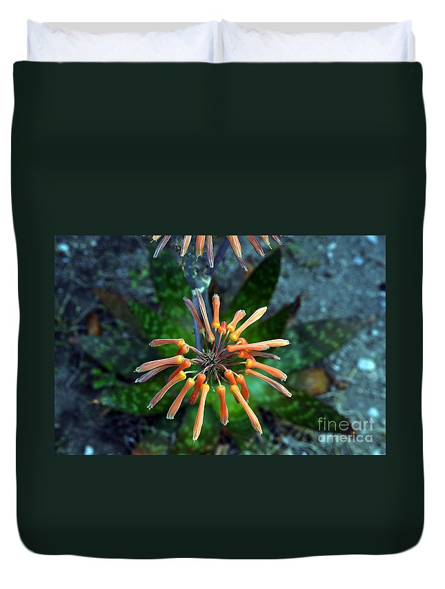 Clay Duvet Cover featuring the photograph Aloe Vera by Clayton Bruster
