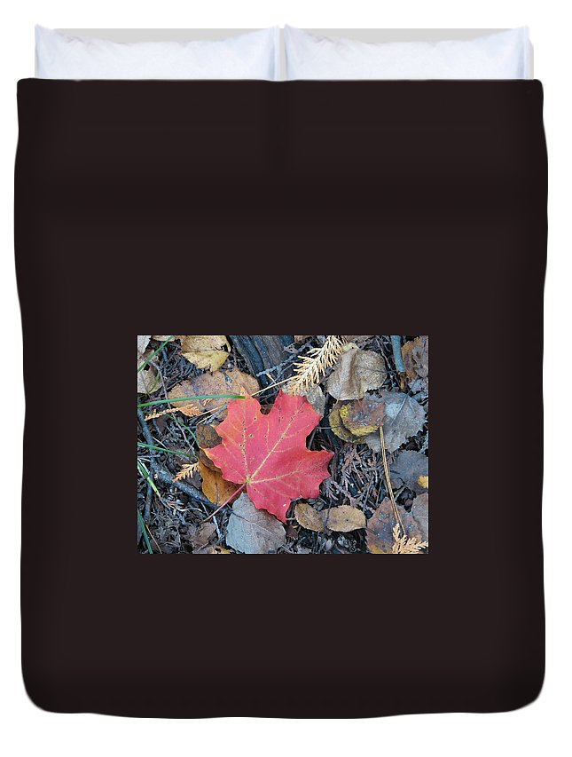 Leaves Duvet Cover featuring the photograph Alone In The Woods by Kelly Mezzapelle