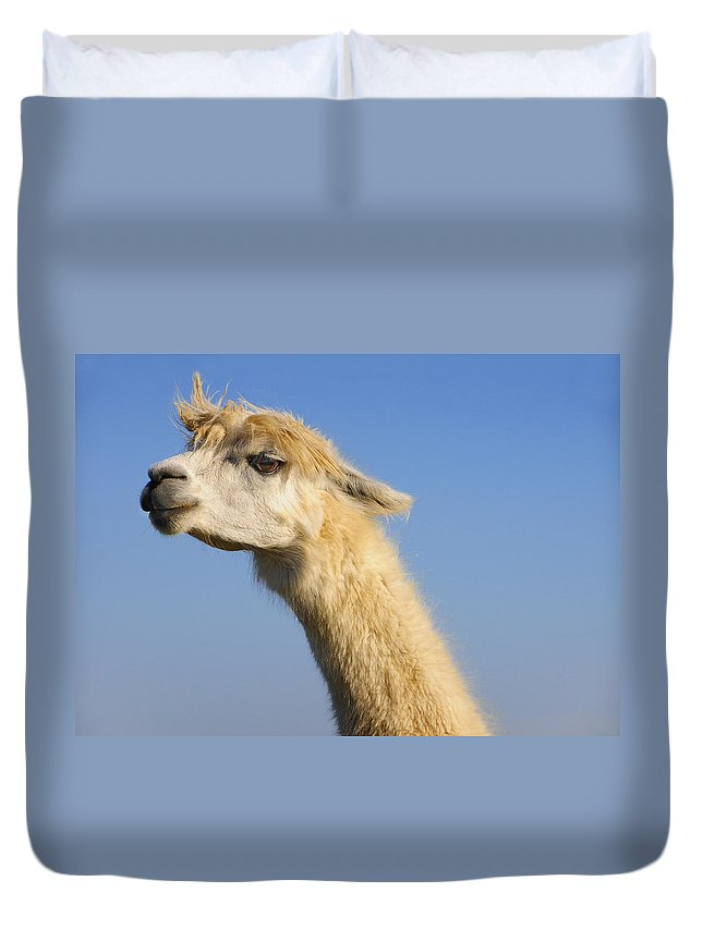 Skip Hunt Duvet Cover featuring the photograph Alpaca by Skip Hunt