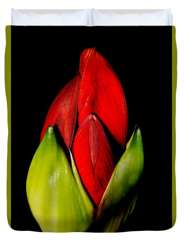 Flower Duvet Cover featuring the photograph Amaryllis by Darcy Dietrich