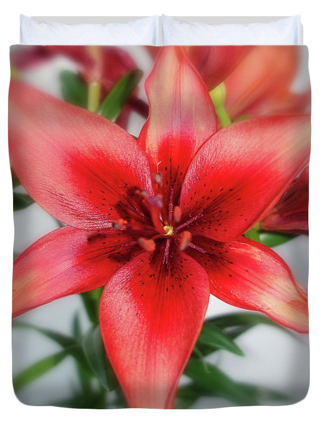 Amaryllis Duvet Cover featuring the photograph Amaryllis In Fading by Solomon Barroa