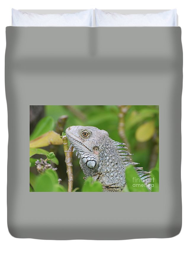 Iguana Duvet Cover featuring the photograph Amazing Gray Iguana Sitting In The Top Of A Bush by DejaVu Designs