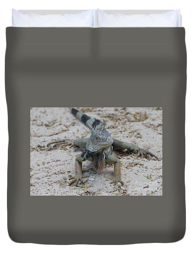 Iguana Duvet Cover featuring the photograph Amazing Iguana With A Striped Tail On A Beach by DejaVu Designs