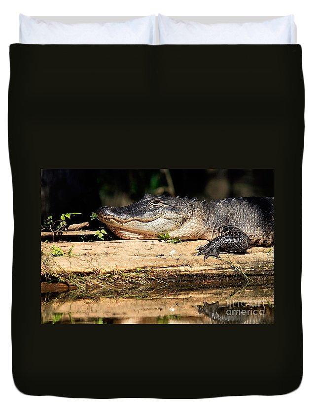 American Alligator Duvet Cover featuring the photograph American Alligator Suns Itself by Matt Suess