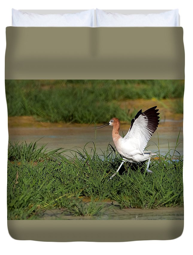 American Avocet Duvet Cover featuring the photograph American Avocet by Tam Ryan