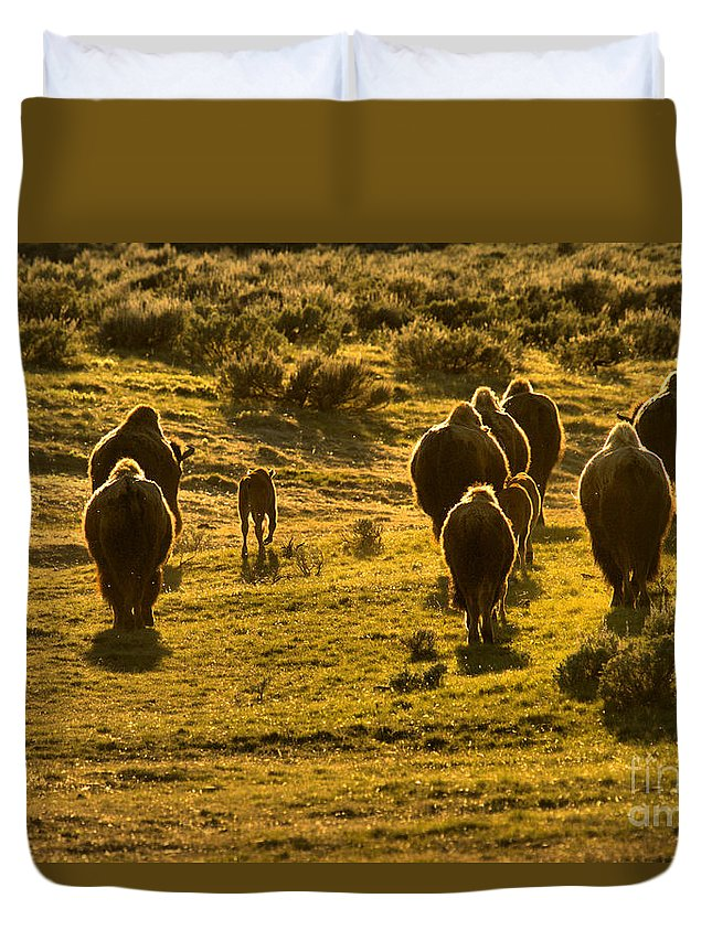 Bison Duvet Cover featuring the photograph American Bison Sunset March by Adam Jewell