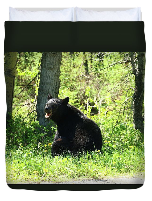 Ursus Americanus Duvet Cover featuring the photograph American Black Bear by Christiane Schulze Art And Photography