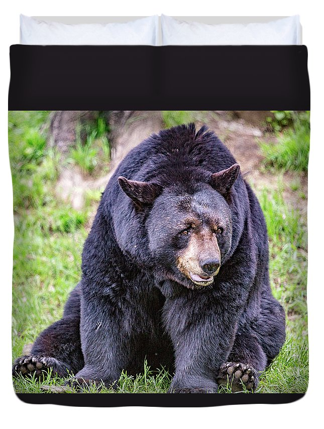 Black_bear Duvet Cover featuring the photograph American Black Bear by Csaba Demzse