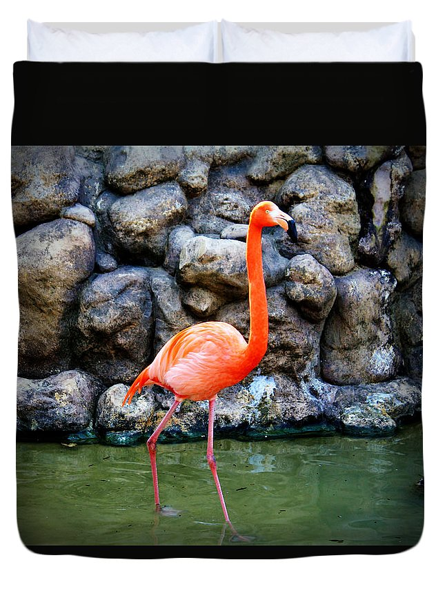 Flamingo Duvet Cover featuring the photograph American Flamingo by Cynthia Guinn