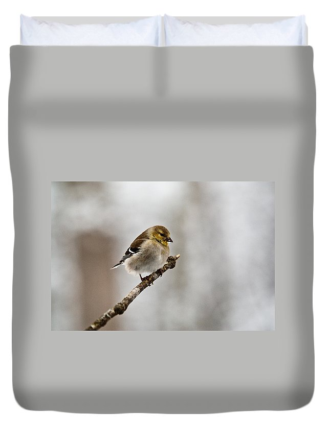 Cove Duvet Cover featuring the photograph American Golden Finch Winter Plumage 1 by Douglas Barnett