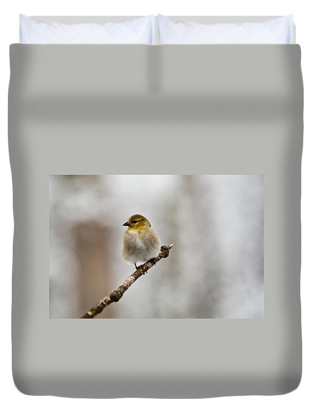Cove Duvet Cover featuring the photograph American Golden Finch Winter Plumage 4 by Douglas Barnett